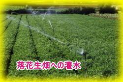 「らっかせい畑」への灌水